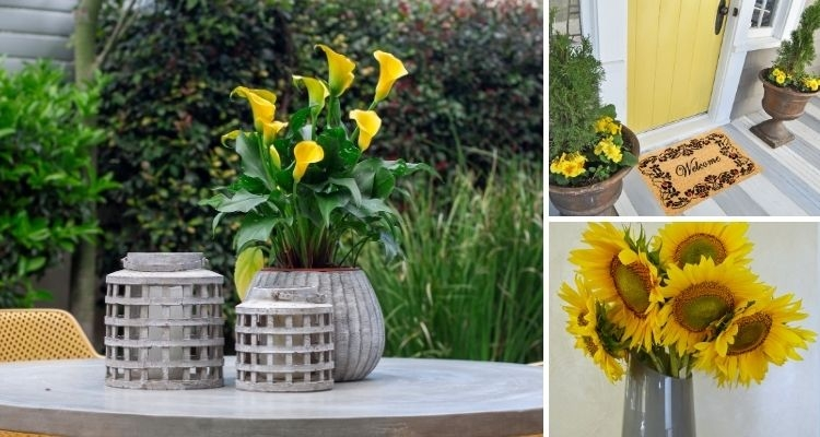Yellow Calla Lily in Pot, Yellow Primroses in Urns Near Yellow Front Door, Yellow Sunflowers in Gray Vase