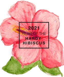 2021_Year of the Hardy Hibiscus Watercolor