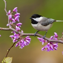 Create a Garden that Attracts Birds