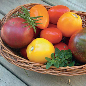 Heirloom Tomato (Lycopersicon esculentum)