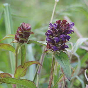 Common Self Heal, Heal-All