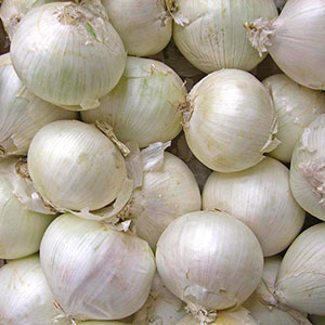 White Onion (Allium cepa)