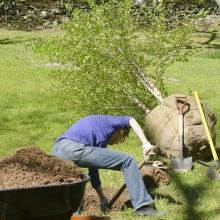 Fall Planting of Trees and Shrubs