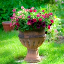 Secrets of Success for Outdoor Potted Plants
