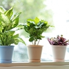 Top 5 Health Rewards of Indoor Plants