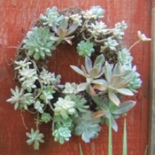 Living Succulent Wreath Tutorial