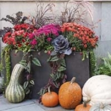 Autumn Container Combinations
