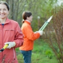 How-to: Pruning Landscape Trees & Shrubs