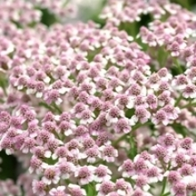 Top 5 Flowering Spring Perennials