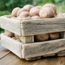 Storage Tips for Fall Vegetables