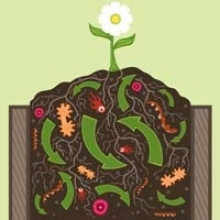 Compost Tips for Beginners