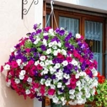 10 Hanging Basket Ideas