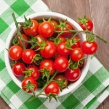 Top 10 Tomato Pests and Problems