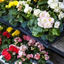 Tips for Choosing the Best Annuals