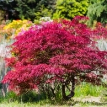 Top 10 Trees and Shrubs for Great Autumn Color