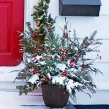 Create a Gorgeous Winter Container Garden