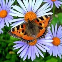 Container Gardens for Butterflies