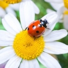 8 Beneficial Bugs for the Garden