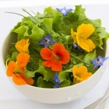 Edible Flowers – a Trend to Delight All Your Senses