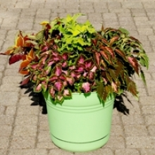 No-Brainer Container: Keep Calm and Coleus On