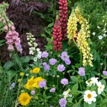 5 Tips to Refresh Your Garden