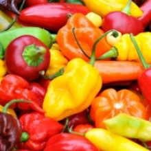 Get to Know Peppers From Sweet to Hot