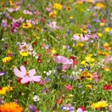 Grow Your Own Wildflower Patch