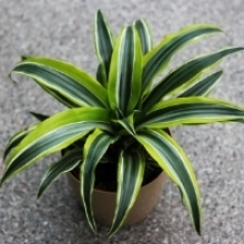 7 Houseplants with Colorful Patterned Foliage