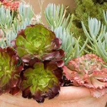 All About Growing Succulents