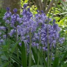 How to Plant a Fragrant Shade Garden