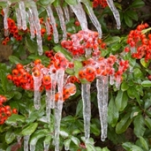 Prevent Winter Damage to Trees and Shrubs