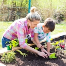 Vegetable Garden Basics - Start a Small Vegetable Garden