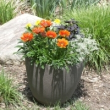 No-Brainer Container Combinations for Annual Plants
