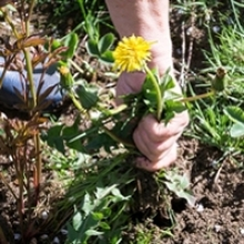 5 Ways to Stop Weeds Before They Start