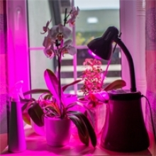 Setting Up Artificial Lights for Indoor Plants