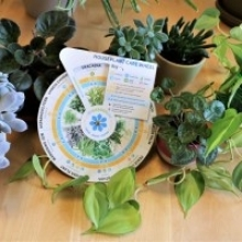 Help with Houseplants: Printable Plant Care Wheel