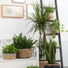 All About Light and Water for Houseplants