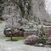 7 Tips for a Beautiful Winter Garden