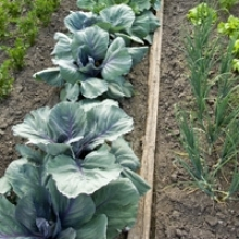 Tips on Crop Rotation for Beginning Gardeners